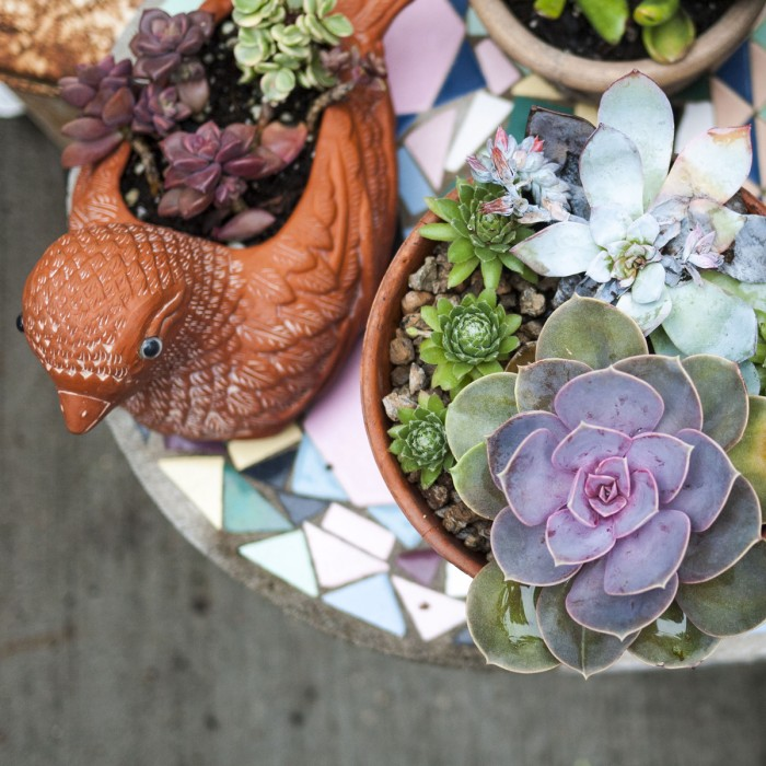 Summer Succulents