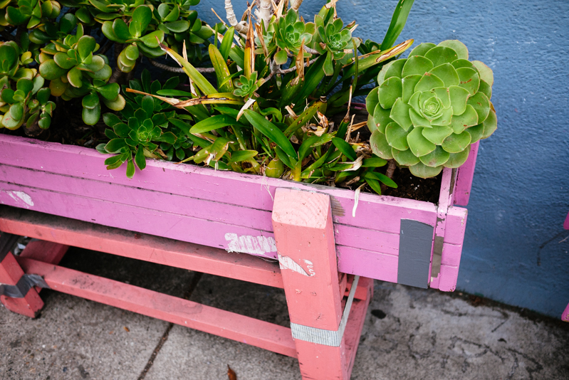 San-Francisco-Travel-Guide-Haight-Ashbury-Succulents